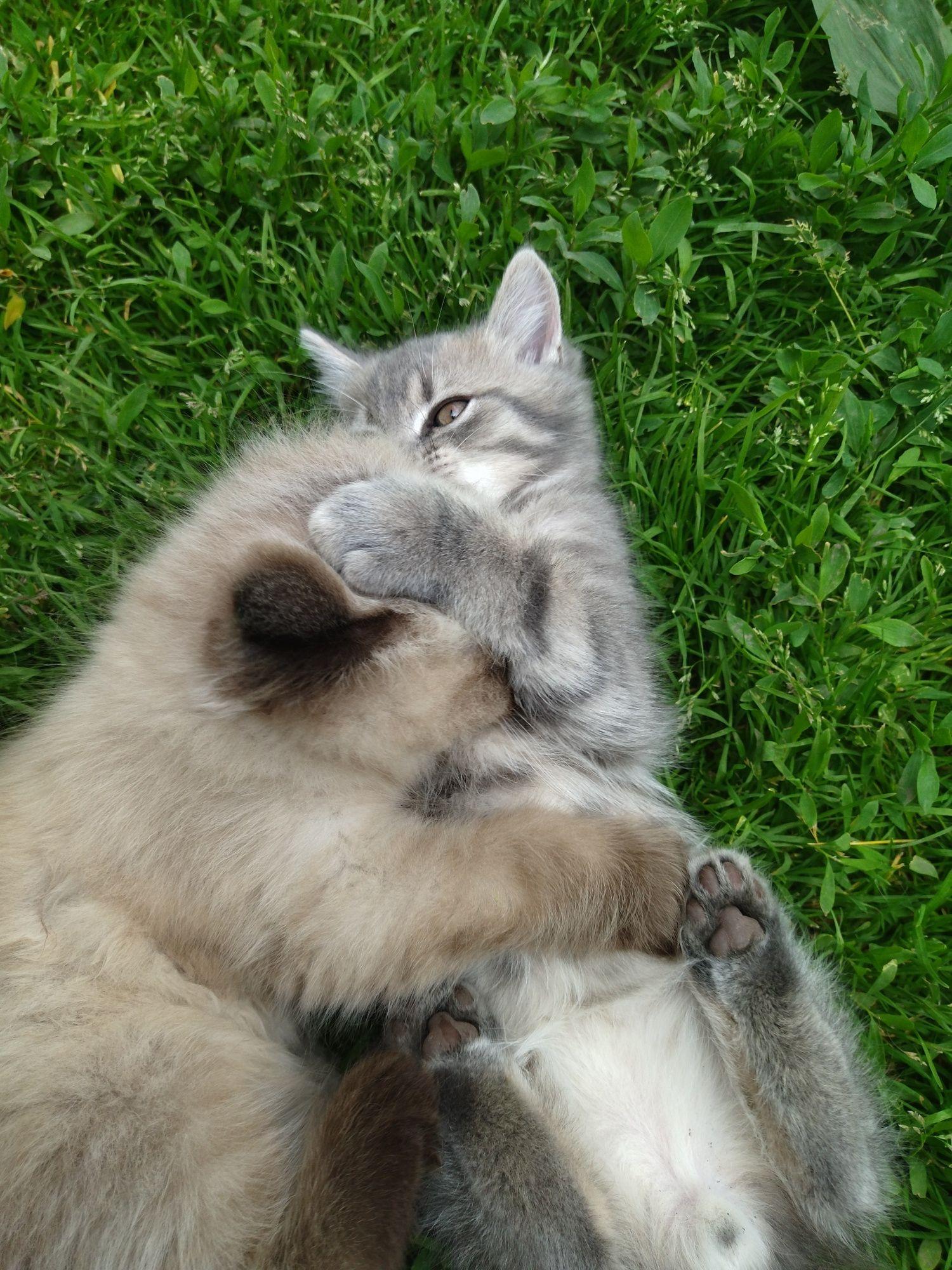 Грайливі кошенята в добрі руки