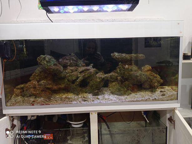 Akwarium żywe morskie