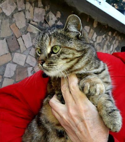 Кошечка стерилизованная мышеловка  бесплатно в добрые руки