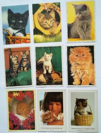 Pocztówki Koty domowe, kot domowy duży wybór każda inna