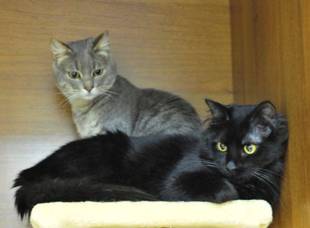 2 милых котика ищут семью!