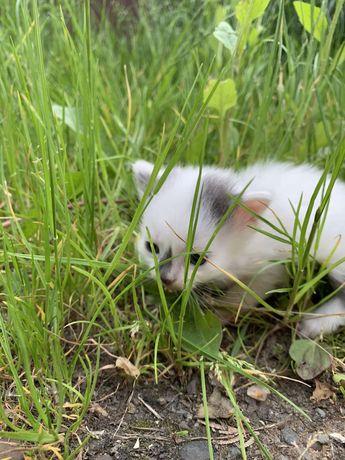 Кошенята шукають сім»ю