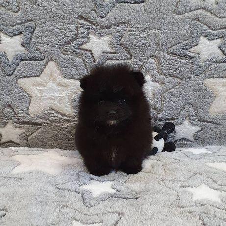 Милые щенки черного мини-помкранского-шпица!!!