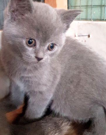 Котенок девочка готова к переезду в новый дом