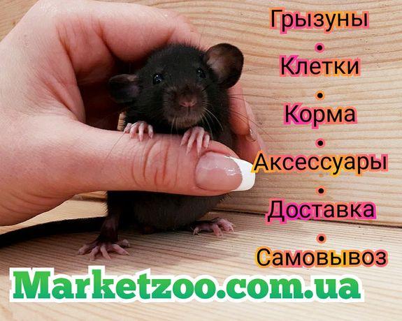 Крысы дамбо,крысята,крыски