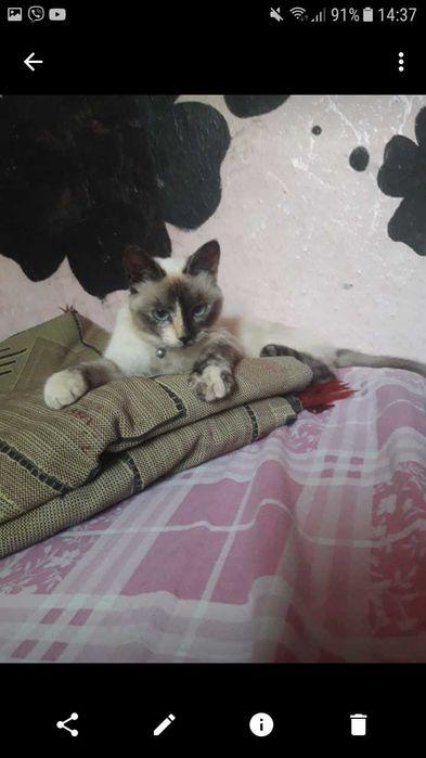 Пропала кошка! (Найдена кошка) Запорожье - изображение 1