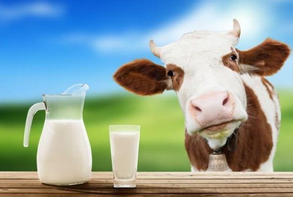 Продам ЭКО домашнее вкусное коровье молоко