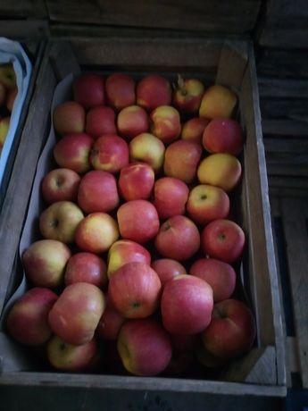 jabłka oraz gruszki deserowe ,sprzedaż bezpośrednio z sadu