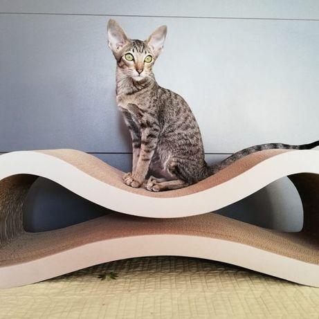 Любимая когтеточка для кошек