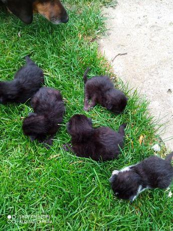 Małe kotki do wydania
