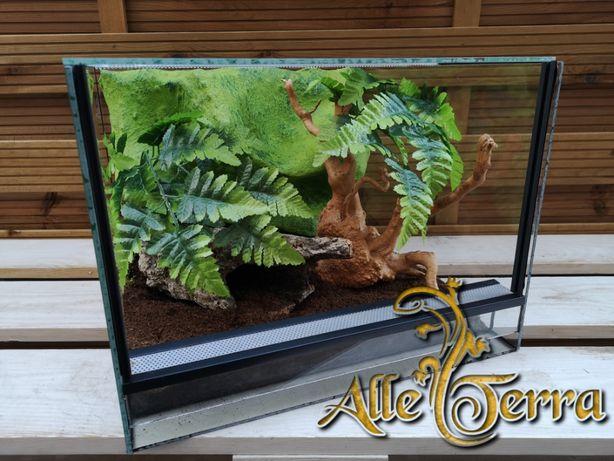 Terrarium szklane o leśnym wystroju 40x40x30 cm. AlleTerra