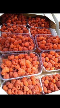 Продаж саджанців малини