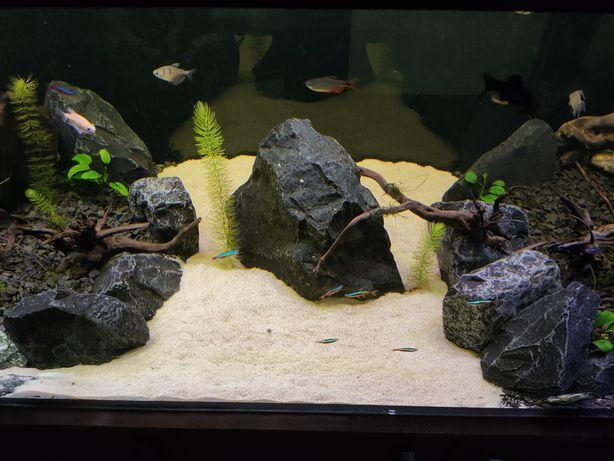 Akwarium 360l wraz z akcesoriami