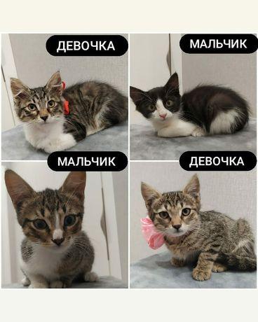 Отдам котиков бесплатно! Очаровательные малыши!