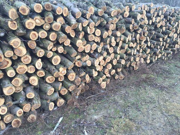 Drzewo opalowe owocowe  suche do palenia wędzenia sezonowane dwa lata