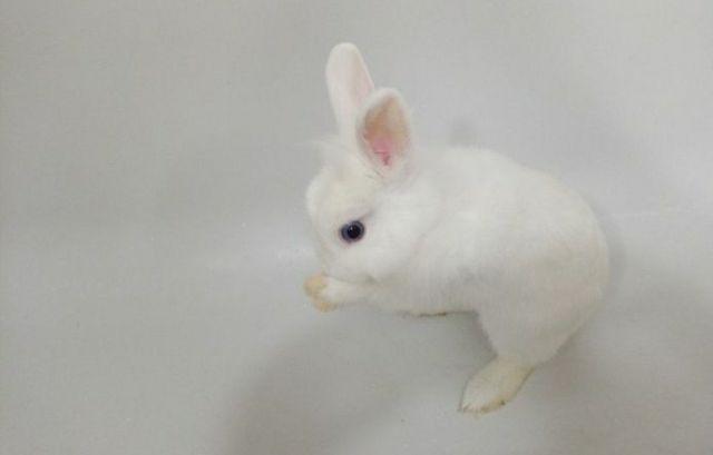 Продам беленького кролика мальчика