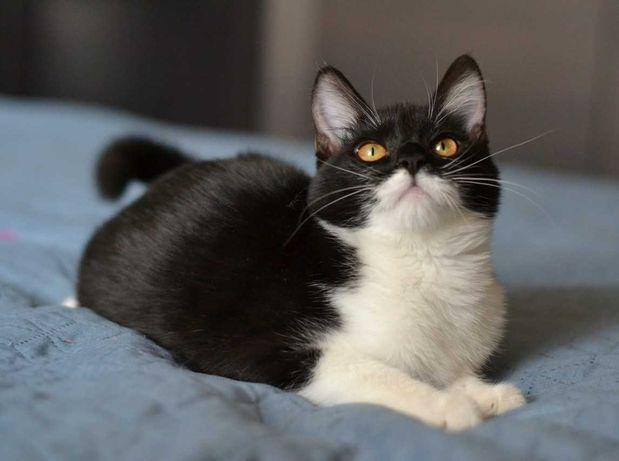 чорно-біла муркотушечка кішечка 7м