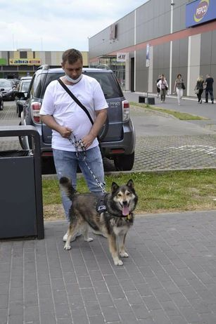 Fado, piekny wyjątkowej psiak, szuka aktywnego domu