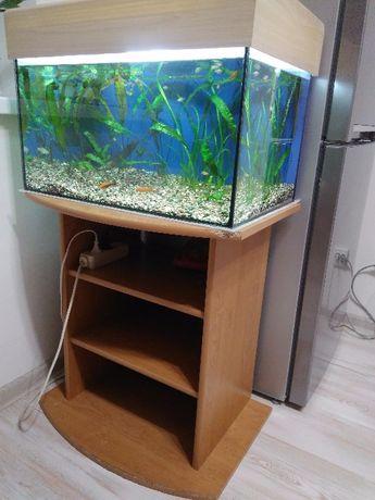 Аквариум на 70 л. комплект + тумба+ крышка + рыбки и растения