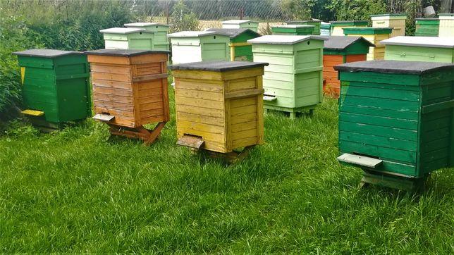 Ule z pszczołami, krainka, warszawski poszerzony, pasieka.