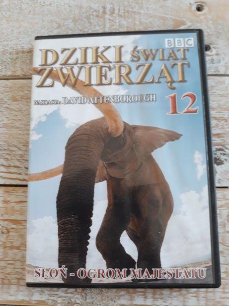 Dziki świat zwierząt. Słoń - ogrom majestatu DVD