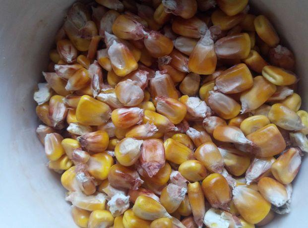 Продам зерно кукуруза