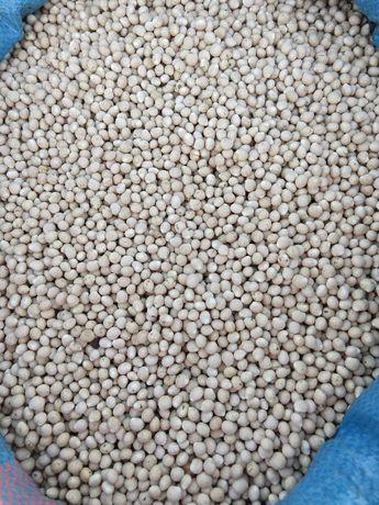 Łubin wąskolistny słodki Rumba (certyfikat ekologiczny)