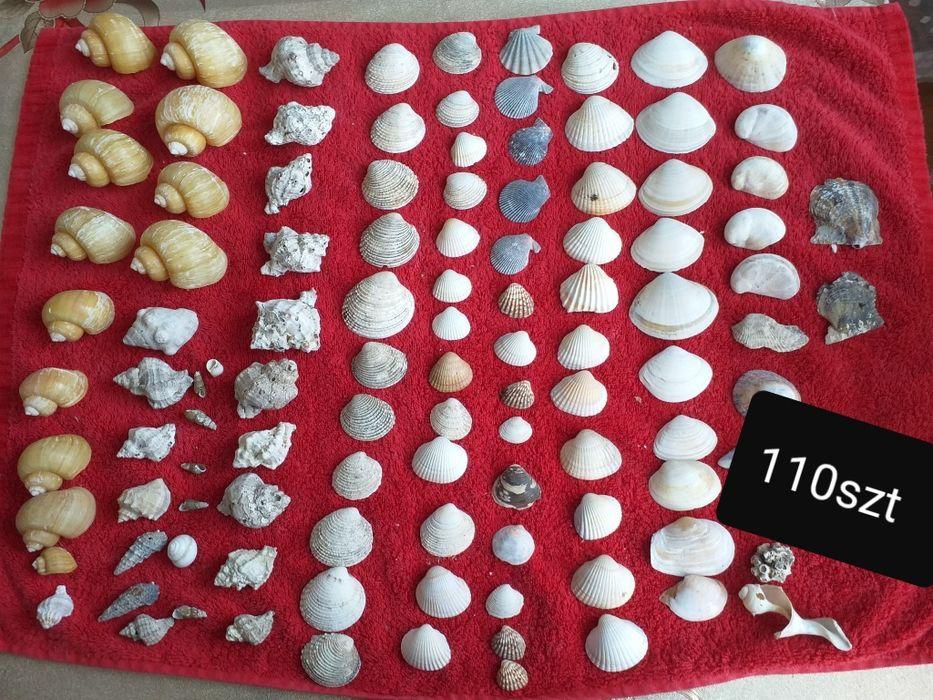 Muszle ostrygowce i inne Żnin - image 1