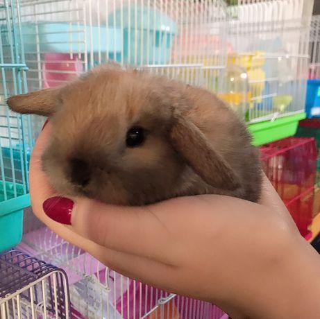 Акция!!! Кролики декоративные