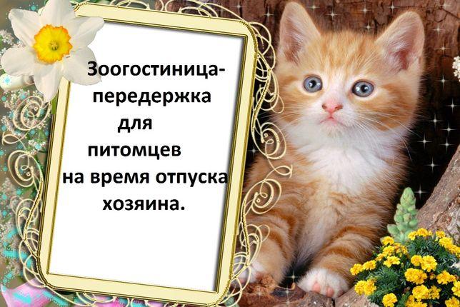Котята маленькие. Отдам. Передержка для животных.