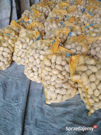 Ziemniaki na Zime DENAR IRGA żółte białe CEBULA Worek 15kg Dowóz