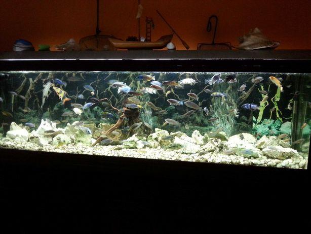 troco aquário 2mt x60x60 filtro fluval fx6 tudo a funcionar
