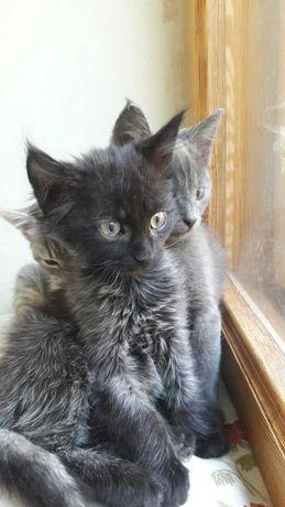 супер котята кошечка и котики