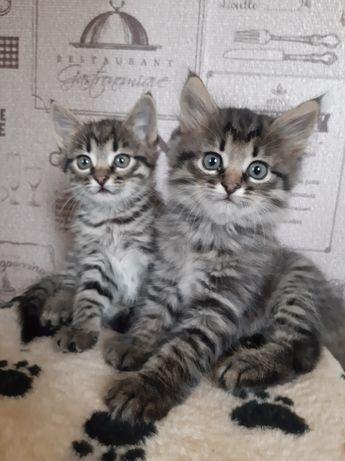 Котята в надежные руки