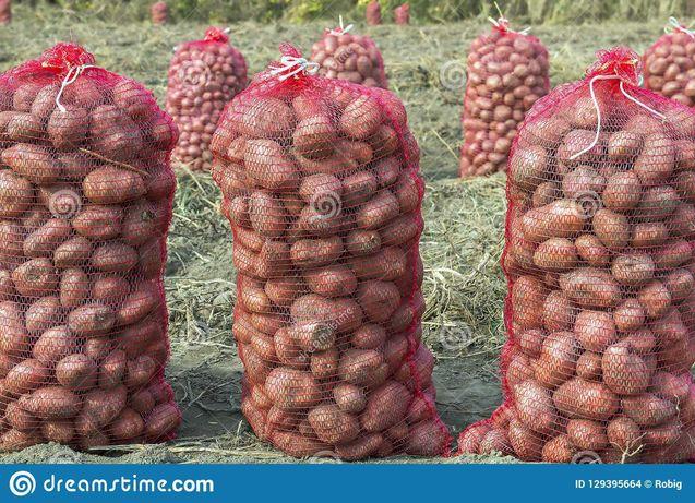 Batatas novas a saco ou kg