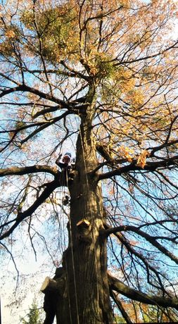 Зрізання дерев, обрізка, кронування, арбористика