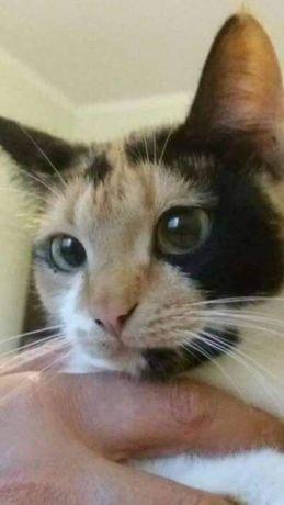 Пропала трехцветная кошка в с.Бузова помогите найти