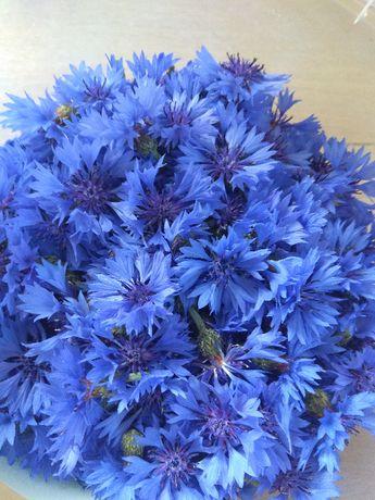 chaber bławatek koszyczek cały kwiat 50g