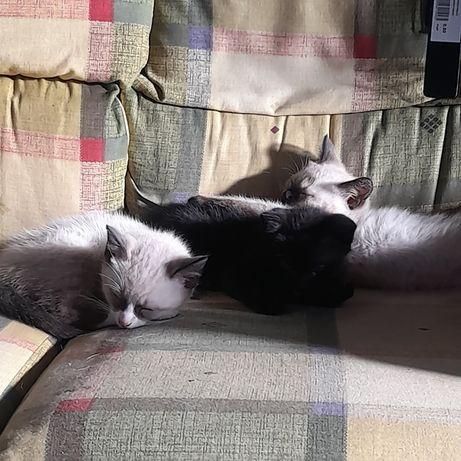 Tenho tres gatinhos machos para dar