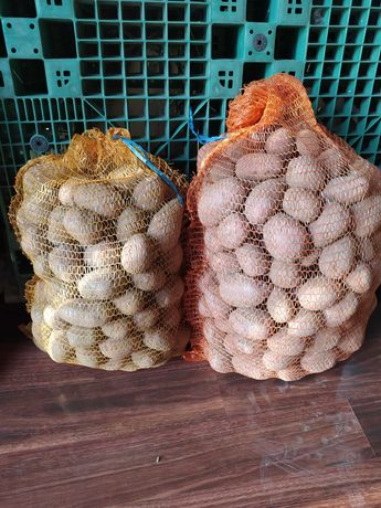 Ziemniaki/ kartofle jadalne, naturalne: Red Sonia, Melody