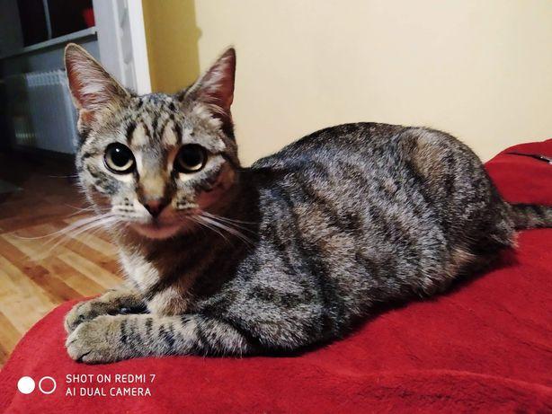 Zaginęła kotka w okolicach Jelesni