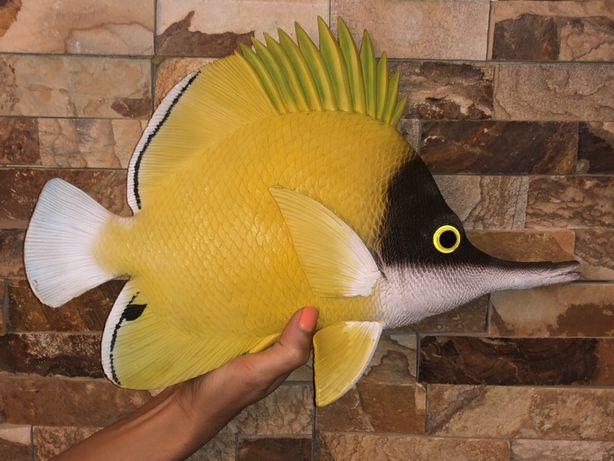 Reff Fish