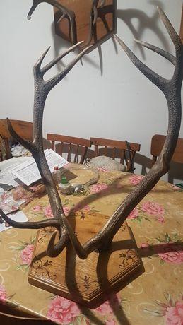 Рога оленя и дубовая подставка