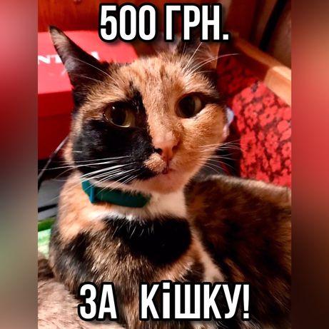Нагорода за спіймання кішки  1000грн с.Опошня!