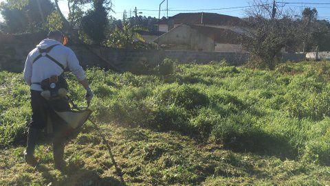 Limpeza de terrenos corte de árvores