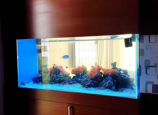 Działające akwarium morskie z osprzętem i życiem