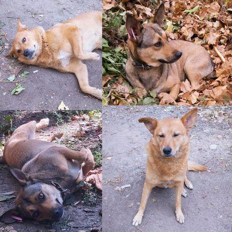 Собаки мальчик и девочка ищут дом! Стерелизованные