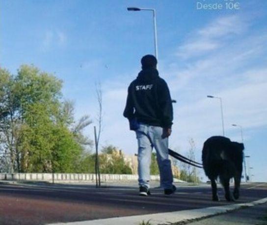 Dog Walking - Passeio cães -  Foz do Porto e Matosinhos