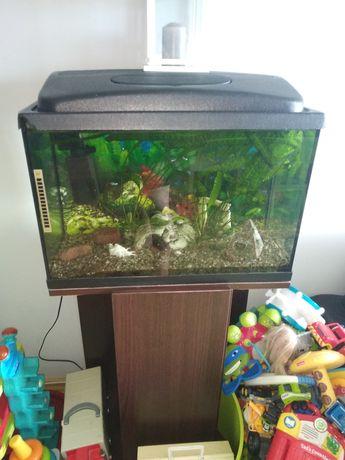 Akwarium kompletne 70 litrów z szafką