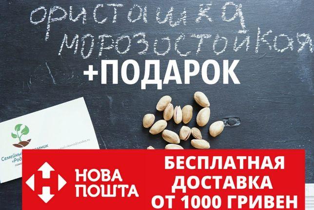 Семена фисташки 10 штук орехи для саженцев, насіння фісташкі +подарок